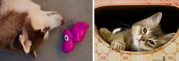 Eko-Pets.nl: voor dieren natuurlijk!