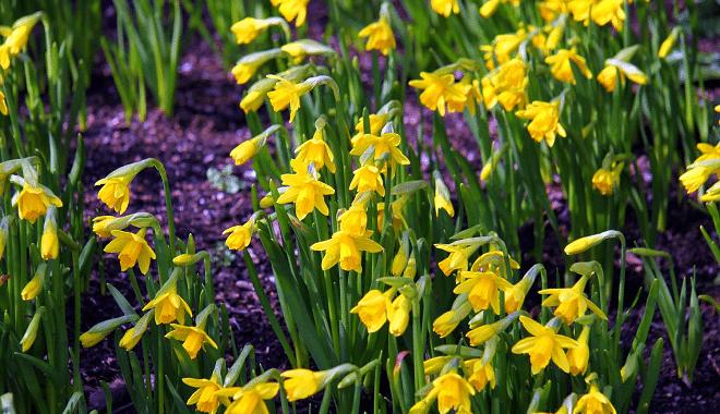 Tips om het begin van de lente te vieren