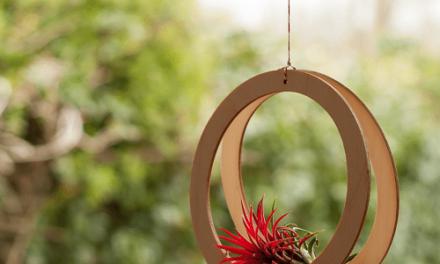 Bijzondere combi: luchtplantjes en houten accessoires