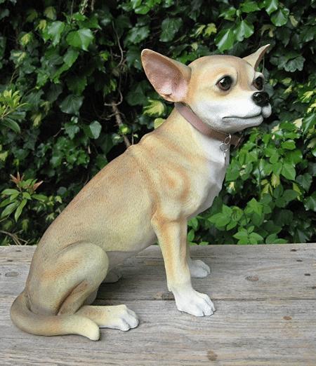 groot beeld Chihuahua korthaar