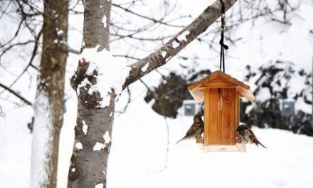 Verwen de vogeltjes in je tuin