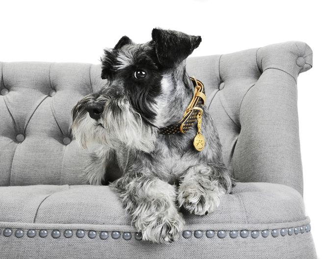 Friendshipcollars: matching accessoires voor huisdier en baasje