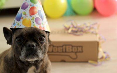 Vier de verjaardag van je hond met de Verjaardags WoefBox