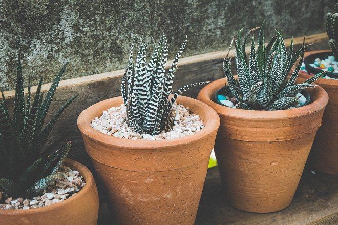 Met deze tips houd je jouw planten langer in leven