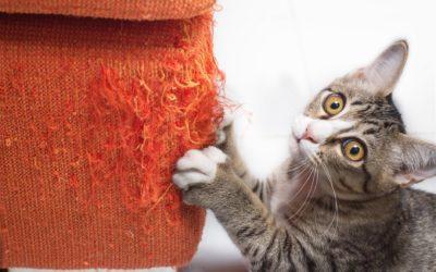 Gedragstherapie voor katten – voor gelukkige katten én baasjes