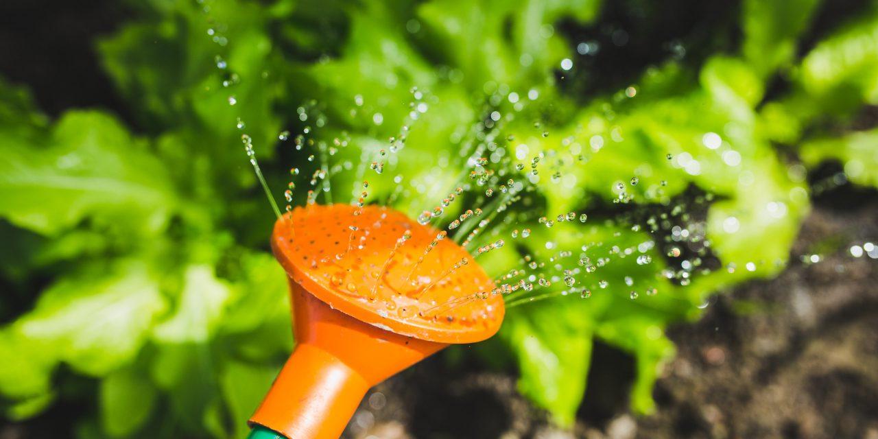 Zo maak je jouw tuin zomerproof voor een laag budget