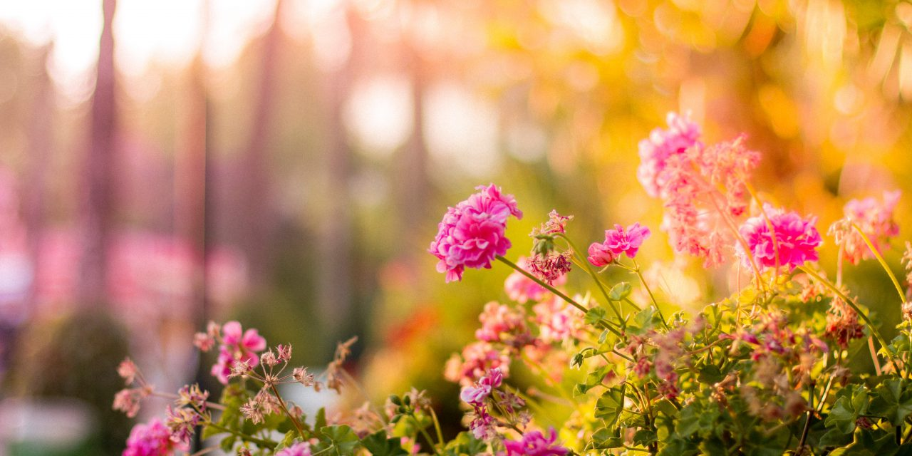 Zo onderhoud je jouw tuin in de zomermaanden