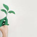 Online planten kopen bij plantje.nl