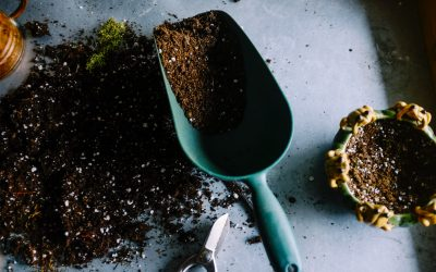 Tips om de tuin zomerklaar te maken met een laag budget